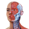 Complete Anatomy 19 for iPad