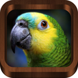 Bird Calls : Bird Sounds, Bird Songs & Bird Guide